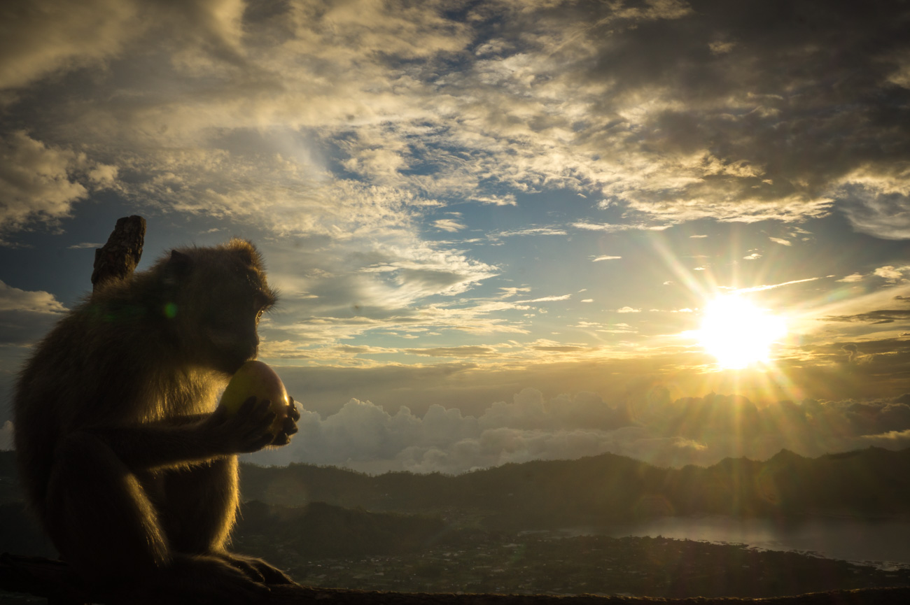 Bali's Affen sind alleine schon eine Reise wert!