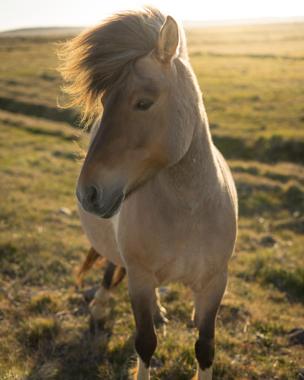 Island Pony!