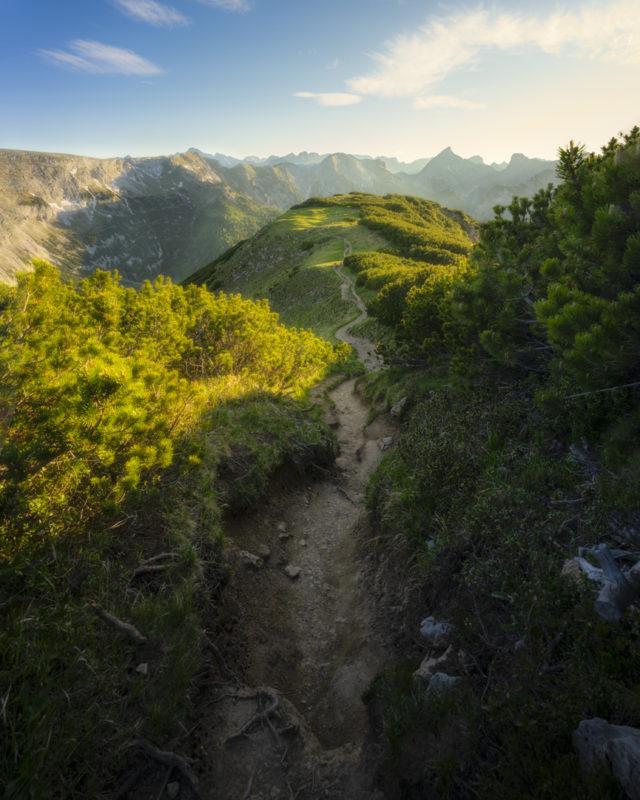 Der Pfad zum Gipfel, von Latschen gesäumt.