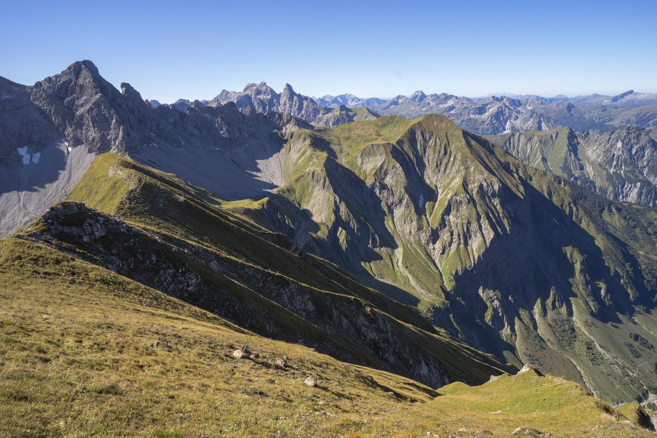 Zahlreiche Steinböcke kurz hinter dem Kreuzeck (2376 m). Mit Blick zur Querung und zum Fürschießersattel (2218 m, mittig)